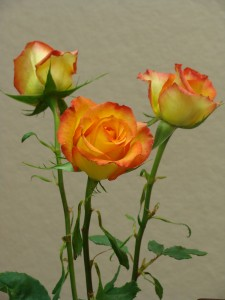 how to draw and paint roses, Lillian Kennedy photo