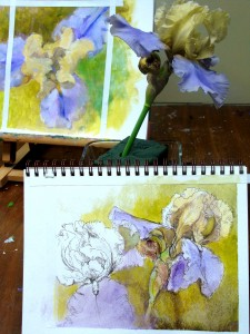 Iris , Boulder CO,  L Kennedy acrylic golden open paints