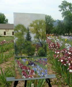 Long's Iris Garden, Boulder CO,  L Kennedy acrylic golden open paints, plein air