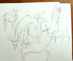 Ann Hayes drew this young buck in the studio garden during class. He did not stay still like the big guy in the video.