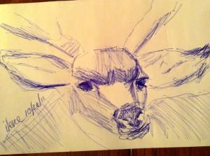 Ilene Rubin from PA weekly art lesson.com BUCK