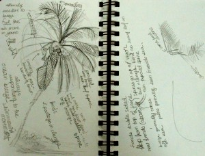 lesson on how to draw a palm tree, Lillian Kennedy, pencil