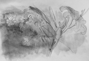 flower drawing, pencil and watercolor, Lillian Kennedy