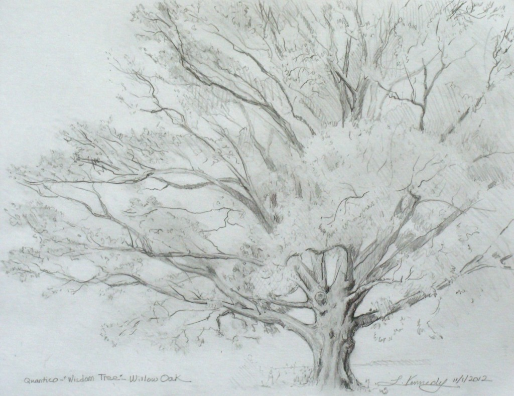 How to draw a tree, Lillian Kennedy -  tree drawing (weeklyartlesson.com)