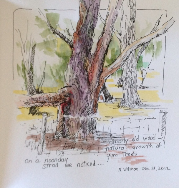 Nyla Witmore, pen and watercolor sketchbook drawing, Australian gumtree