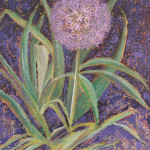 Margaret Bobb - acrylic, Alium - flower stage 7