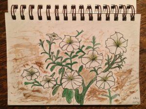 Bob Turner's petunia drawing